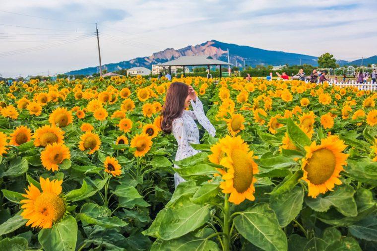zhong-she-guan-guang-flower-market-taichung-alexisjetsets-2-e1511930868602